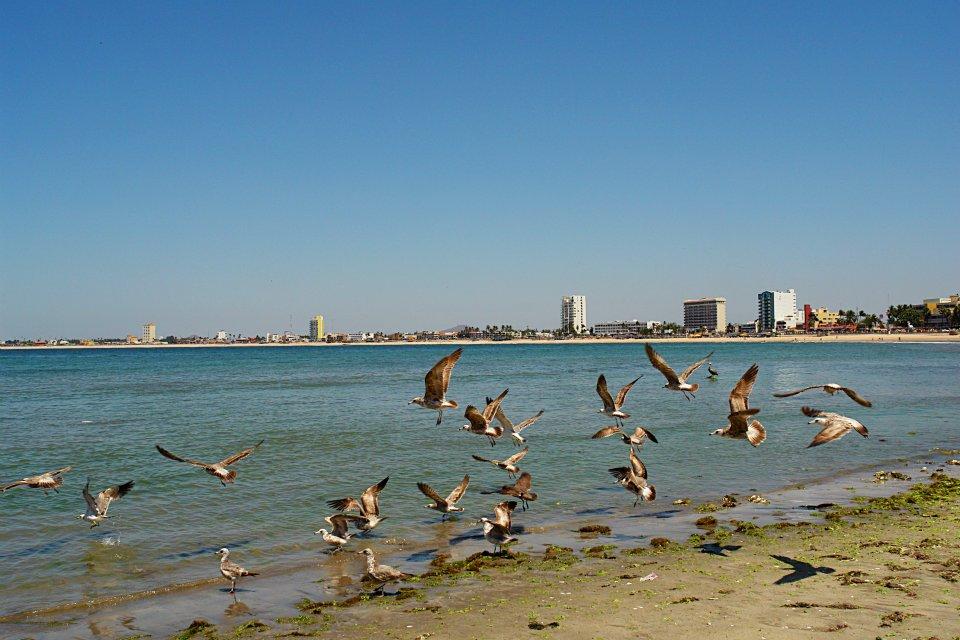 Playa y Pelicanos